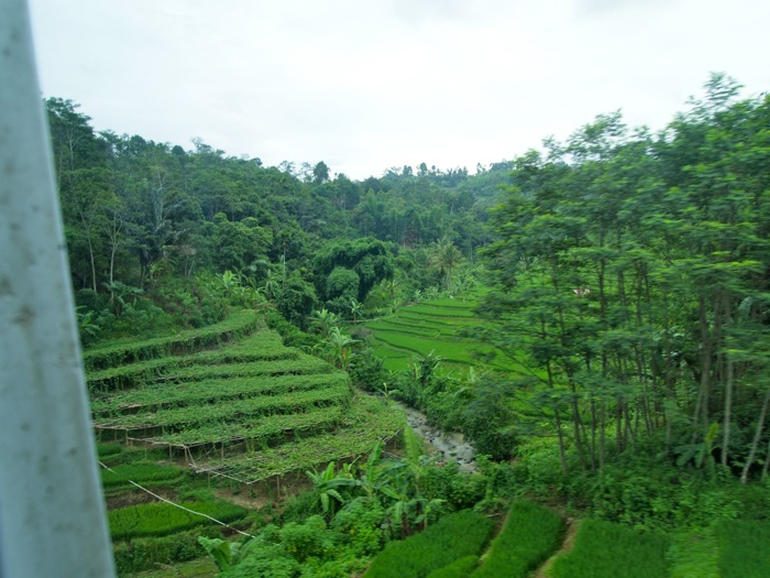 Lush Rice Terraces